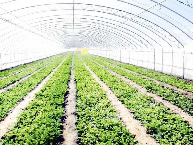 大场镇位于黄岛区西南,有87个行政村,5.4万人,总面积117平方公里,其中城镇建成区面积2.45平方公里,居住人口1.4万人。青岛市海水生态工程化养殖基地被青岛农委评为青岛高效农业科技示范园区,列为青岛市重点开发的十大农业园区之一。   2012年,大场镇以实现富民强镇为目标,立足本地优势和特色,解放思想、勇争一流,上下联动、团结拼搏,实现了全镇经济社会又好又快发展。111月份,全镇财政一般预算收入完成4701万元,占全年任务的102.7%;其中,工商税收完成1727万元,占全年任务的104.