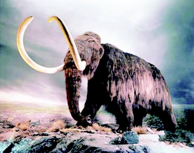 从而打开克隆这种史前巨型哺乳动物的大门