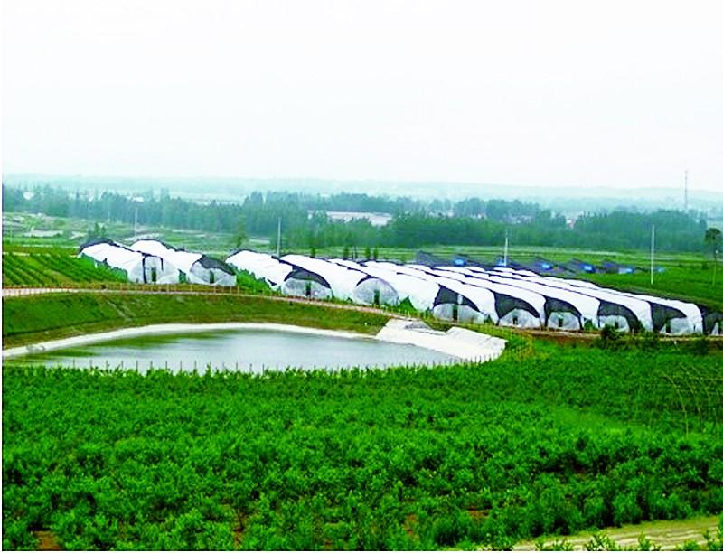 宁晋县构建现代农业园区新格局