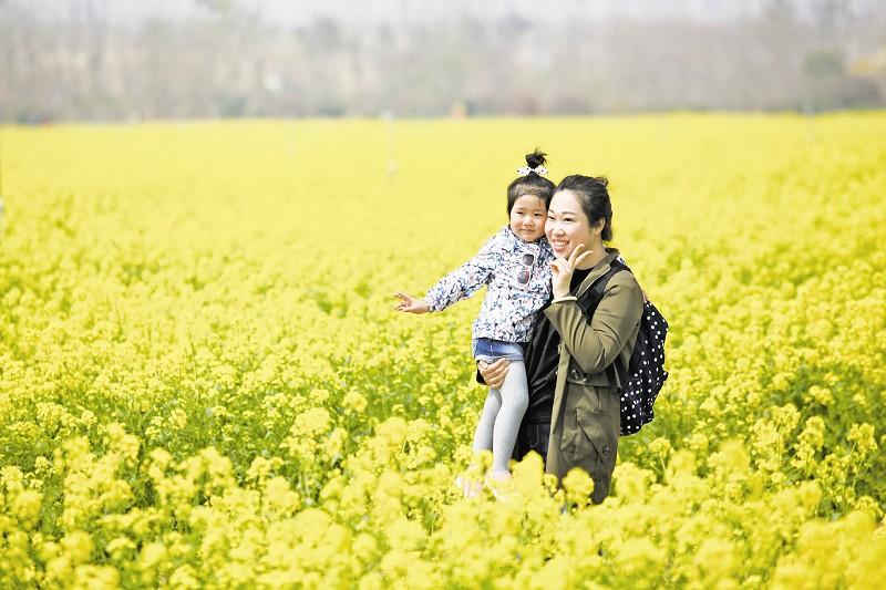 """青岛西海岸现代农业发展有限公司总经理助理韩刚告诉记者:""""油菜花在我"""